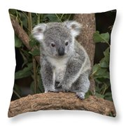 Queensland Koala Juvenile Australia Throw Pillow