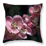 Quince 5160 Throw Pillow