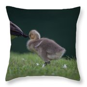 Quite Time Throw Pillow