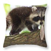 Raccoon Baby Throw Pillow