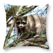 Raccoon In A Tree Throw Pillow