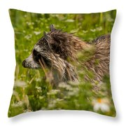 Raccoon In The Meadow Throw Pillow