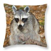 Raccoon Procyon Lotor Adult Foraging Throw Pillow