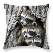 Raccoon Trio At Den Minnesota Throw Pillow by Jurgen and Christine Sohns