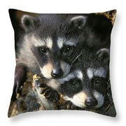 Raccoon Young Procyon Lotor In Tree Throw Pillow
