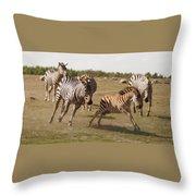 Racing Zebras 1 In Color Throw Pillow