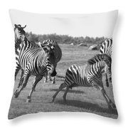 Racing Zebras 1 Throw Pillow
