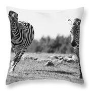 Racing Zebras Throw Pillow