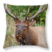 Racked Roosevelt Elk Throw Pillow