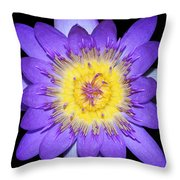 Radiant #2 Throw Pillow