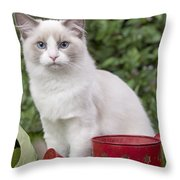 Ragdoll Cat Throw Pillow
