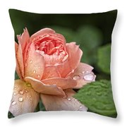 Rain Drenched Rose Throw Pillow