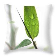Rain Drops On Bamboo Leaves Throw Pillow