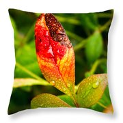 Rain Drops On Colorful Leaf Throw Pillow