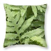 Rain Drops On Ferns Throw Pillow