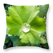 Raindrops On Leaves Throw Pillow
