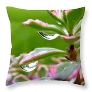 Raindrops On Sedum Throw Pillow