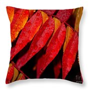Rain Fall Color Throw Pillow