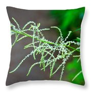 Rain Forest Magic Throw Pillow by Dana Kern