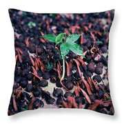 Rain Forest Seedling, Indonesia Throw Pillow