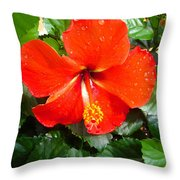 Rain Kissed Hibiscus Beauty Throw Pillow by Ella Char