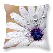 Rain Soaked Daisy Throw Pillow