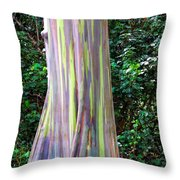 Rainbow Eucalyptus 3 Throw Pillow
