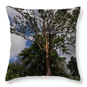 Rainbow Eucalyptus - Tall Proud And Beautiful Throw Pillow