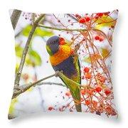 Rainbow Lorikeet In Flame Tree Throw Pillow