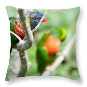 Rainbow Lorikeet Parrot Trichoglossus Haematodus Throw Pillow
