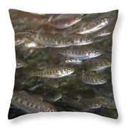 Rainbow Trout Fry Throw Pillow