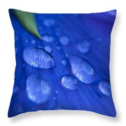 Raindrop Pansy Throw Pillow by Anne Gilbert