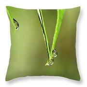 Raindrop Reflection Throw Pillow