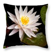 Raindrop Water Lilly Throw Pillow