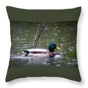 Raindrops Falling On Duck Head Throw Pillow
