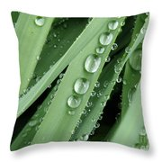 Raindrops On Blades Of Grass Throw Pillow