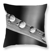 Raindrops On Grass Blade Throw Pillow