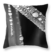 Raindrops On Grass Blades Throw Pillow