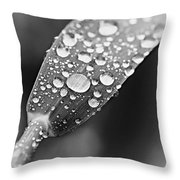 Raindrops On Grass In Black And White Throw Pillow