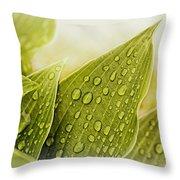 Raindrops On Hostas Throw Pillow