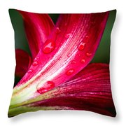 Raindrops On Red Petals Throw Pillow