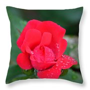 Raindrops On Rosebud Throw Pillow