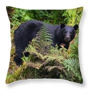 Rainforest Black Bear Throw Pillow