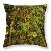 Rainforest Colors Throw Pillow