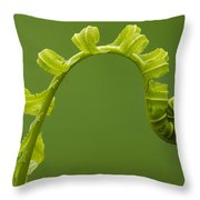 Rainforest Fern Unfurling Sabah Borneo Throw Pillow