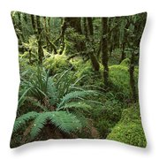 Rainforest In Fjordland National Park Throw Pillow