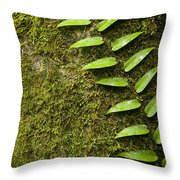 Rainforest Vine Climbing Sabah Borneo Throw Pillow