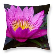 Rainy Day Water Lily Reflections II Throw Pillow