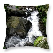 Rainy Season Runoff Throw Pillow
