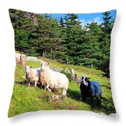 Ram And Ewes Throw Pillow
